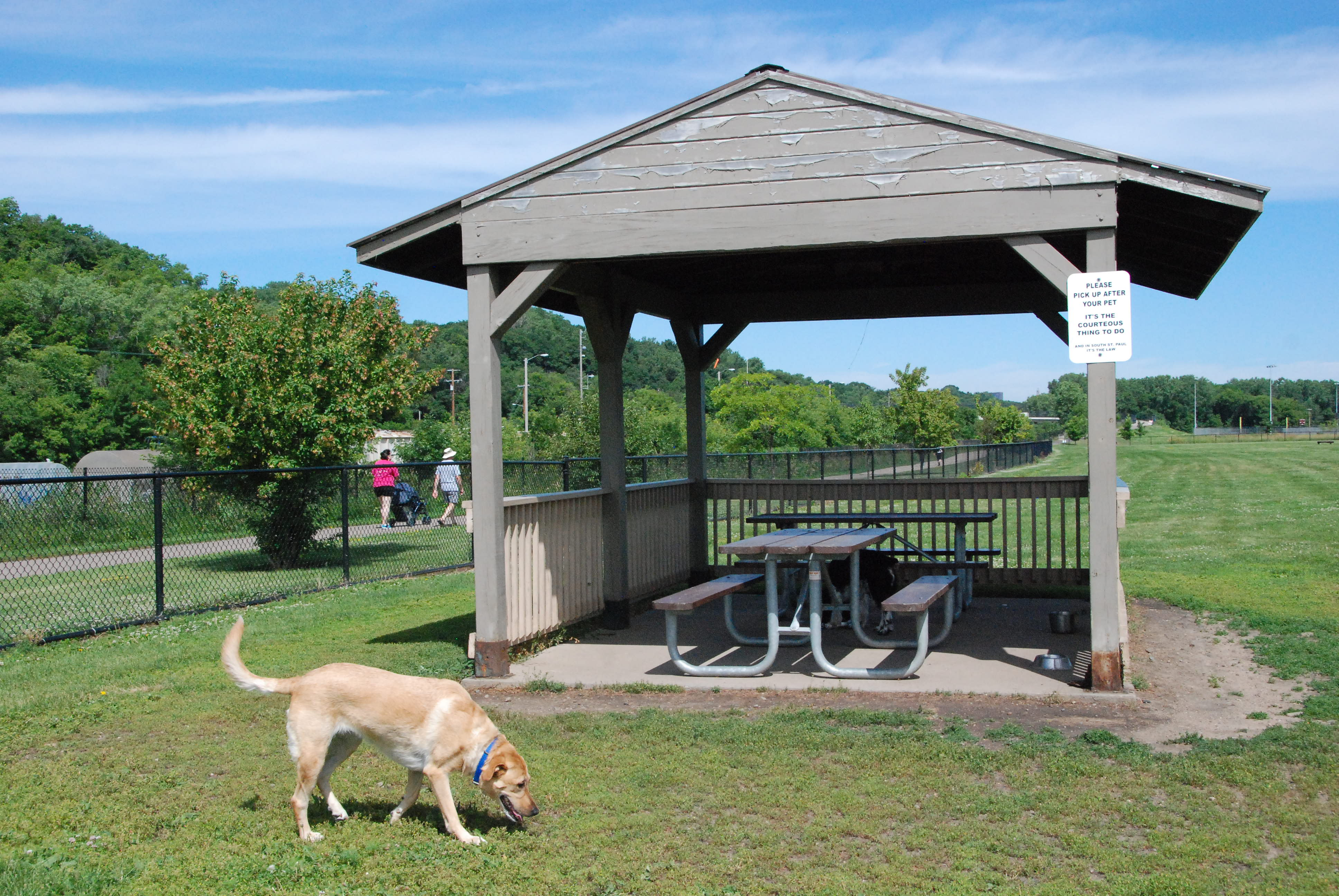 Dog at Picnic Shelter
